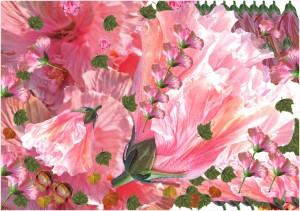 Hibiscus s'ouvre copie.jpg